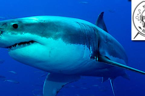 2 билета в музей истории аквариумистики на выставку «Живые акулы». Неизведанный мир морских глубин!  Скидка 50%