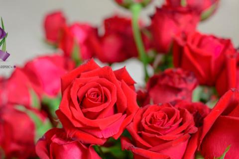 Порадуйте близких! Роскошные букеты из 9, 15, 25, 51 или 101 розы от студии цветов «Ириc» со скидкой до 55%
